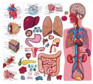 Методика проведения банных процедур: осваиваем тонкости здоровой науки