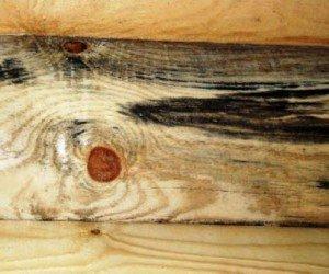 Пораженное грибком дерево