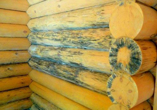 Как самостоятельно бороться с грибком на стенах